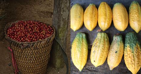 fruitful report #2 -コーヒーとカカオの共通因数- 統合…