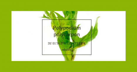展示企画『百の植物片-京都で採集された植物の肖像-』