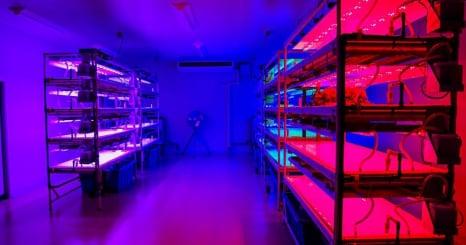 農業にイノベーションを!静岡県が前例のない最先端農業プロジェクトを始動、「AOIパーク」がオープン