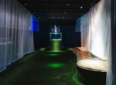 世界最大級の水族館「海遊館」とクリエイターの共創<br /> 特別展「海に住んでる夢を見る~魚と私のふしぎなおうち~」を開催