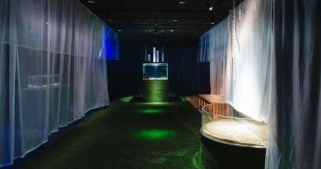 世界最大級の水族館「海遊館」とクリエイターの共創 特別展「海に住んでる夢を見る~魚と私のふしぎなおうち~」を開催